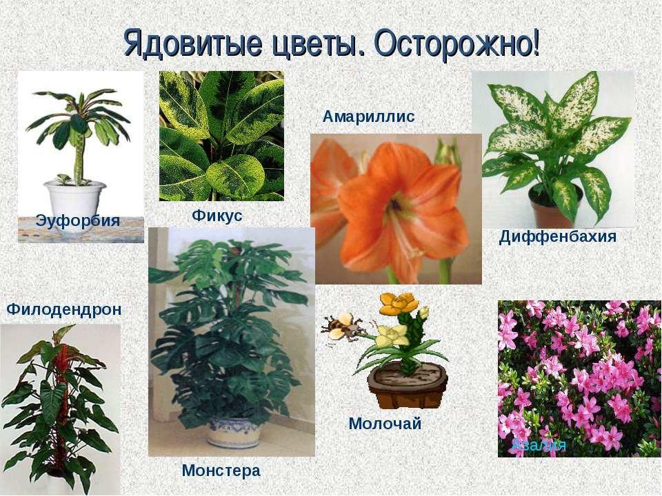 Растения приполярья картинки и названия