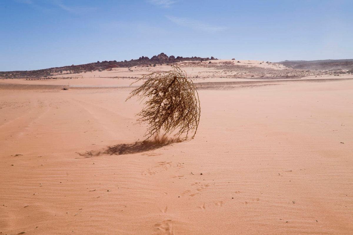 Картинки пустыня и перекати-поле