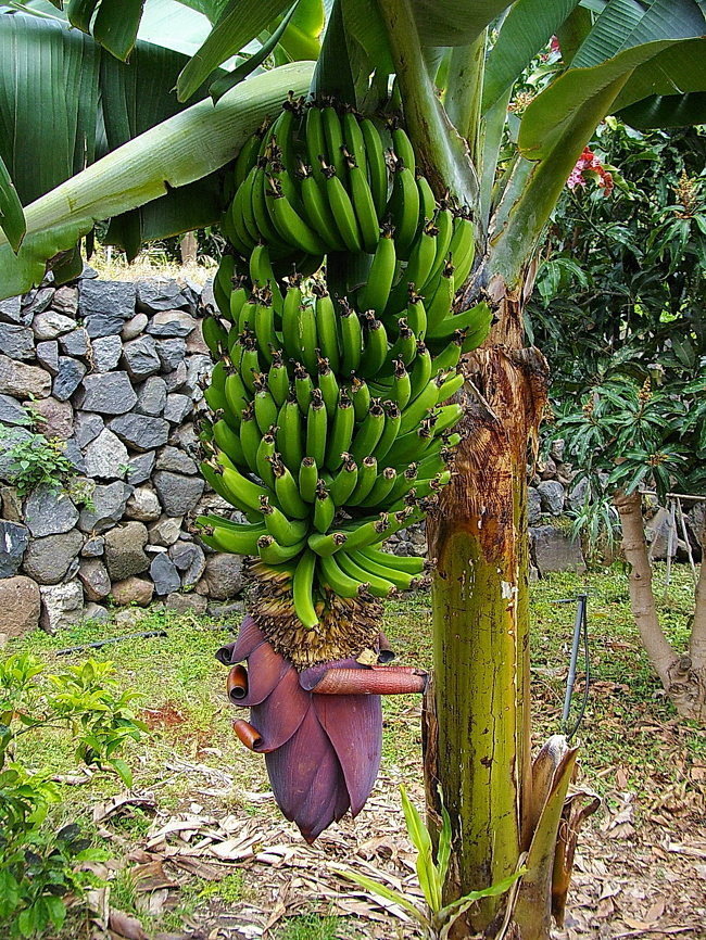 каждому артисту бананы в природе фото школьнику
