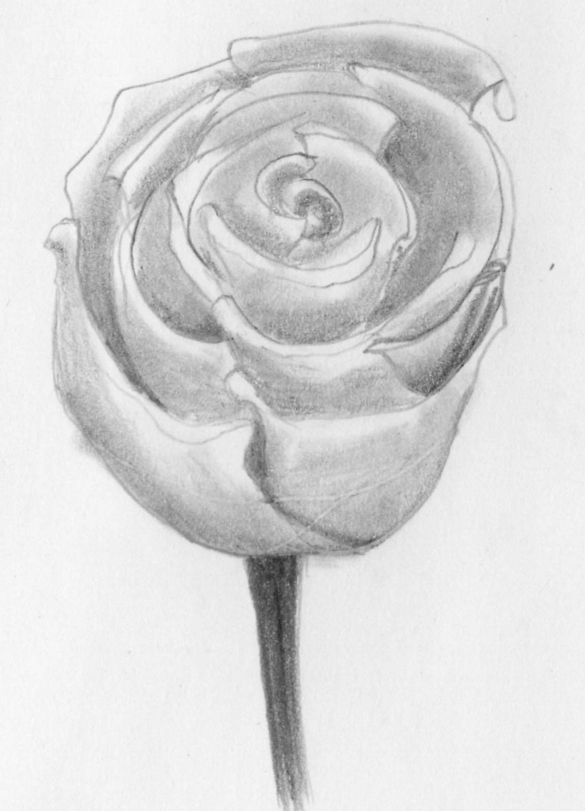 рисовать рисунки розы города куеда