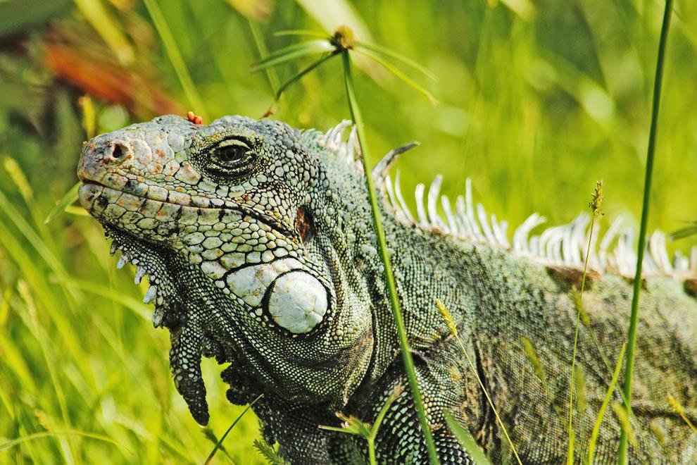 Картинки животных амазонии