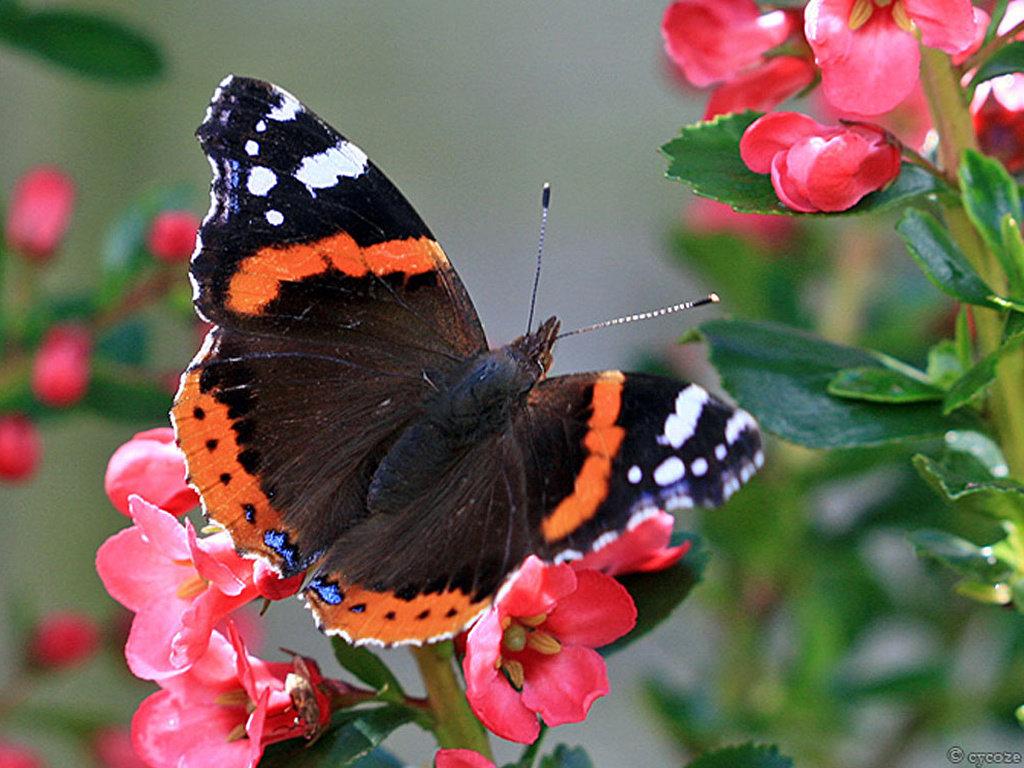 Картинки бабочек жуков