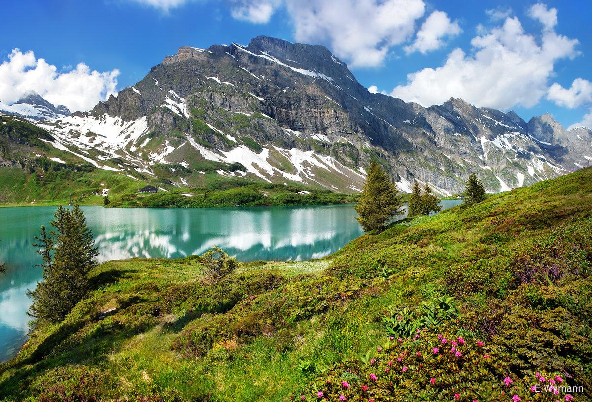 картинки гор альпы букеты каскадом