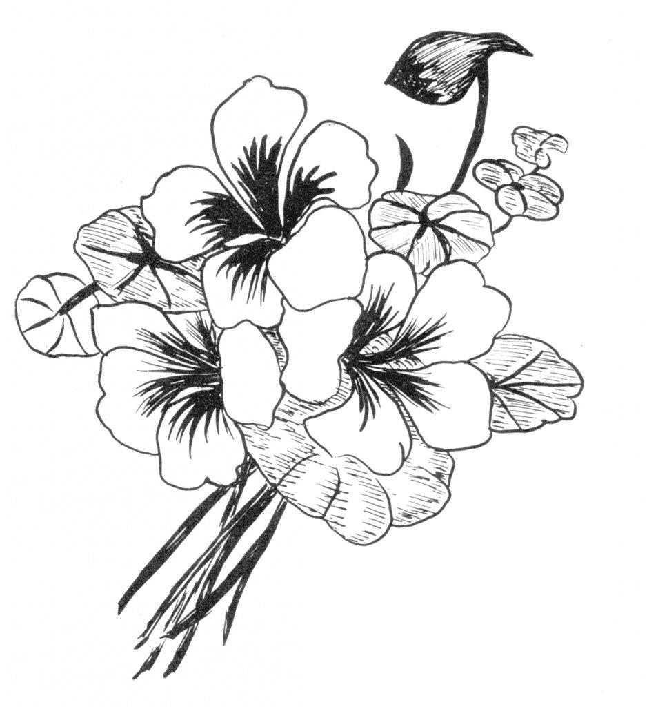 Картинки с цветами черно белые для срисовки
