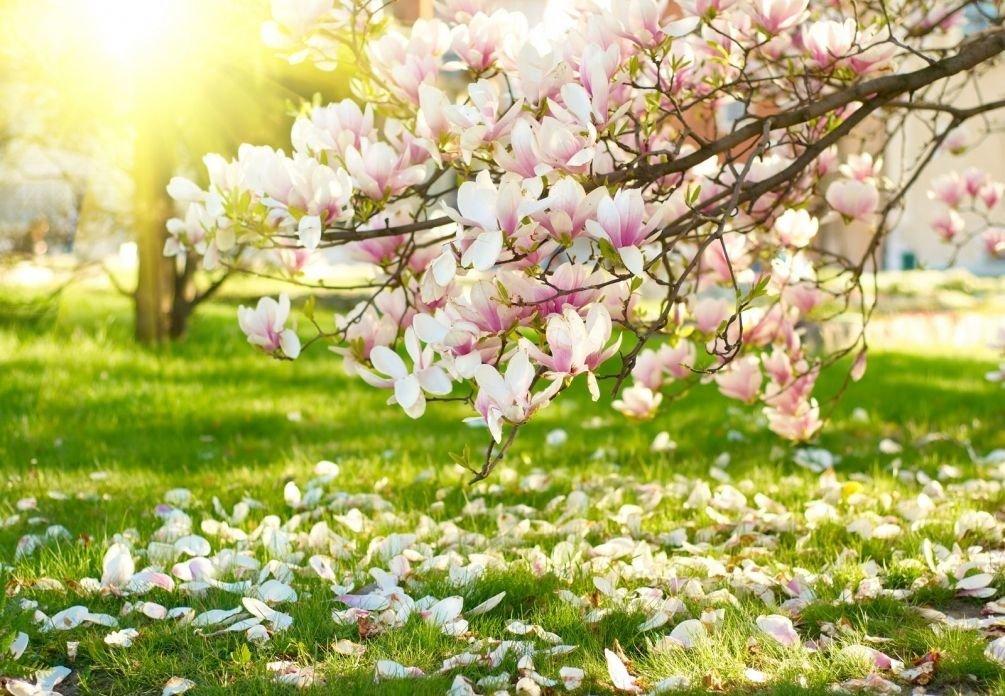 Картинка цветут сады весной