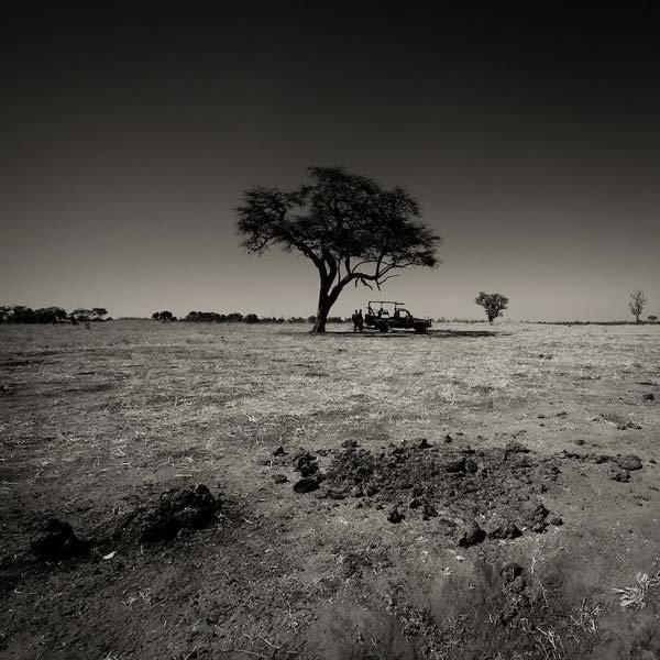 Черно белые картинки саванны