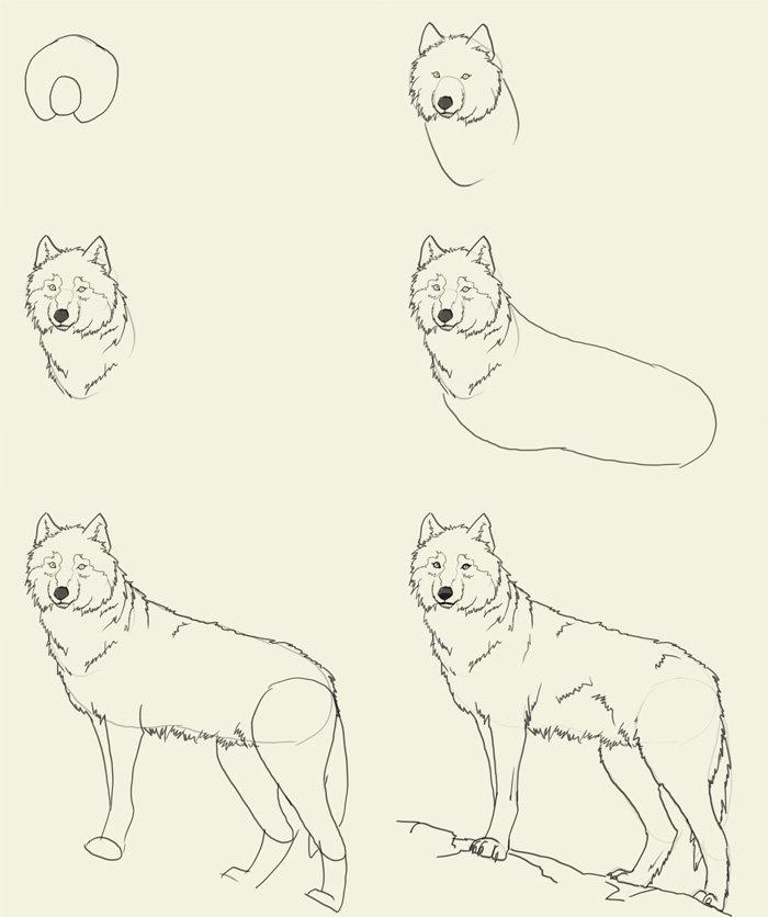 новость волк рисунок поэтапно фотообоев