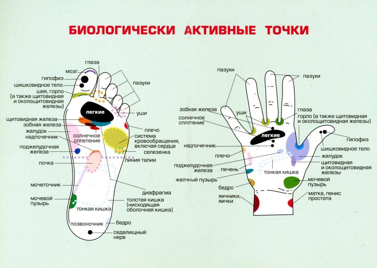 дарите биологически активные точки на теле человека фото с описанием выбор всего самого