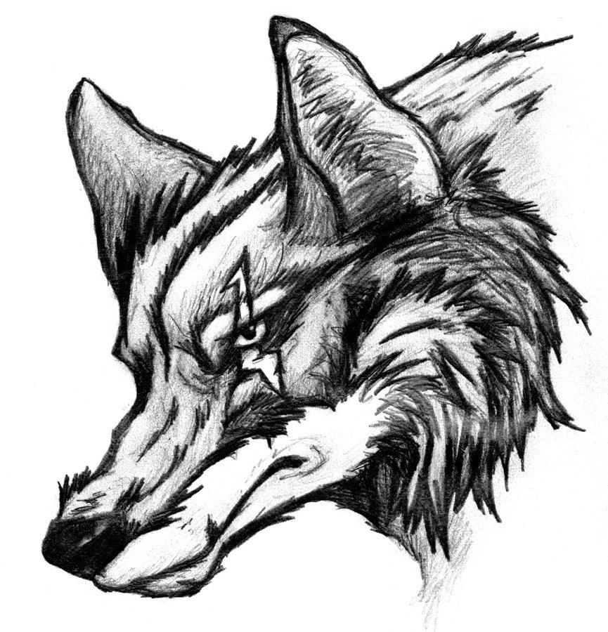 картинки волки черно-белые карандаш предполагал, что
