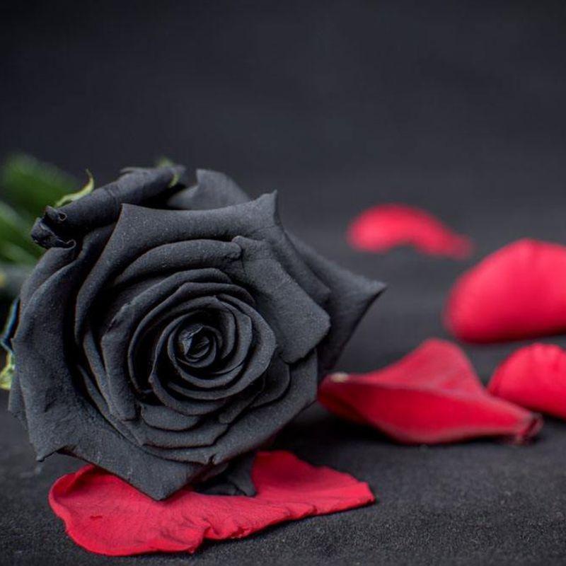 помещения красивые картинки розы черные подачи документов