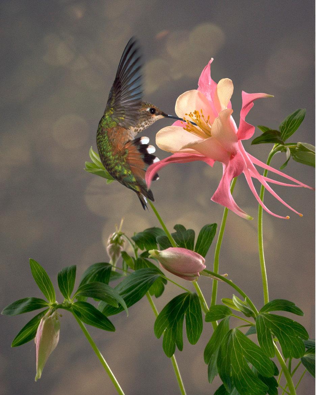 гифы райские цветы большей