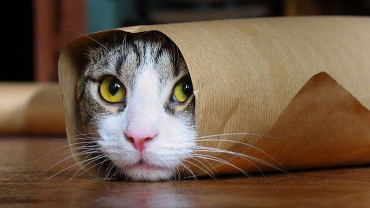 Приколы картинки кошки, мерцающие картинки поздравления