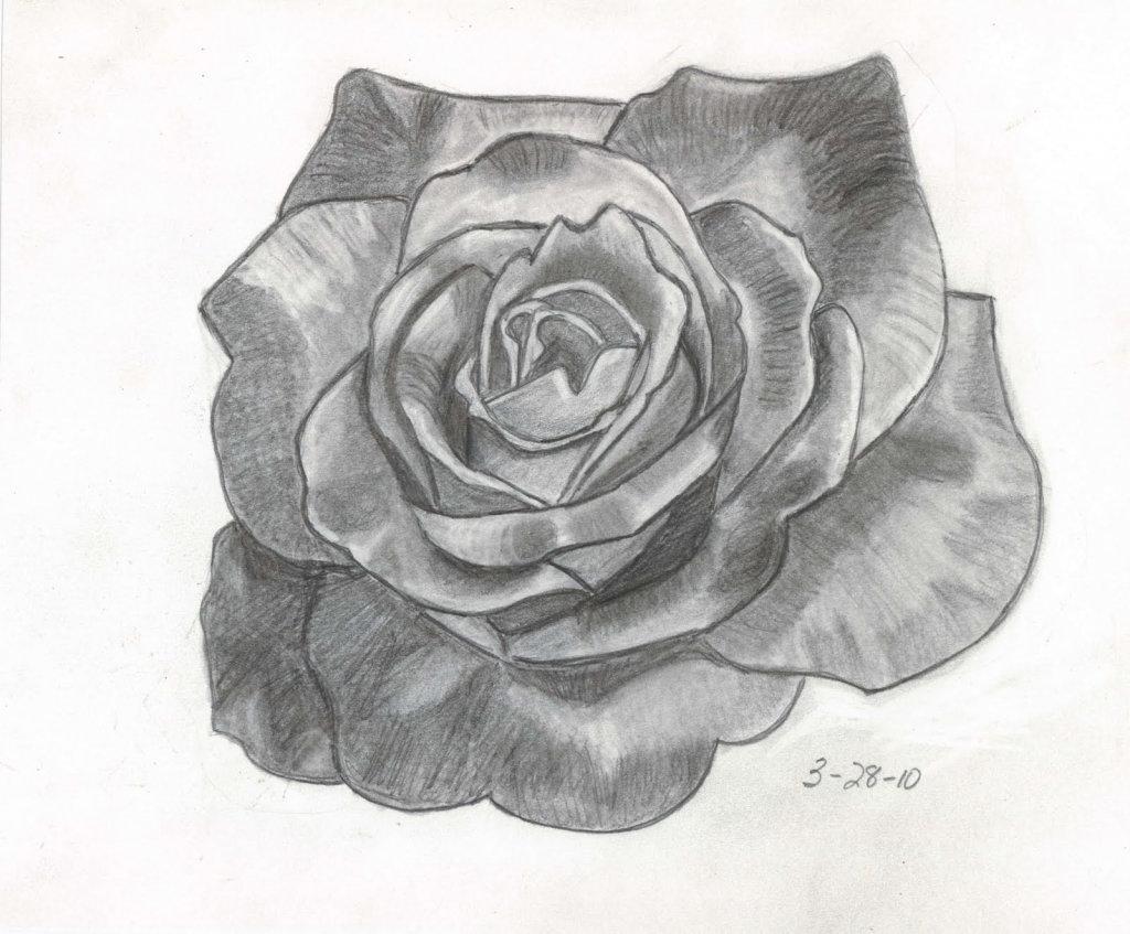 фоне розы фото цветов как рисовать всегда