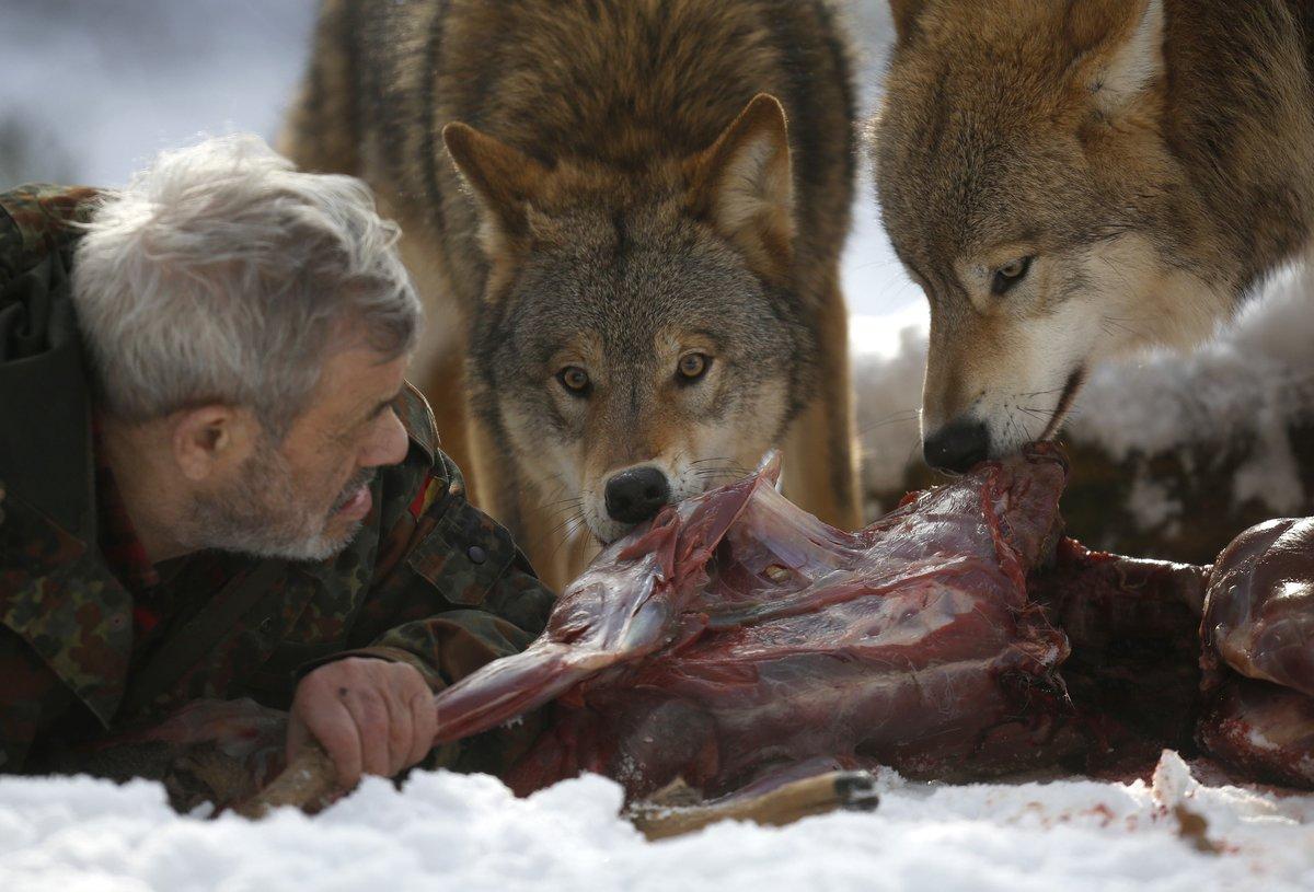 зачем фото волка