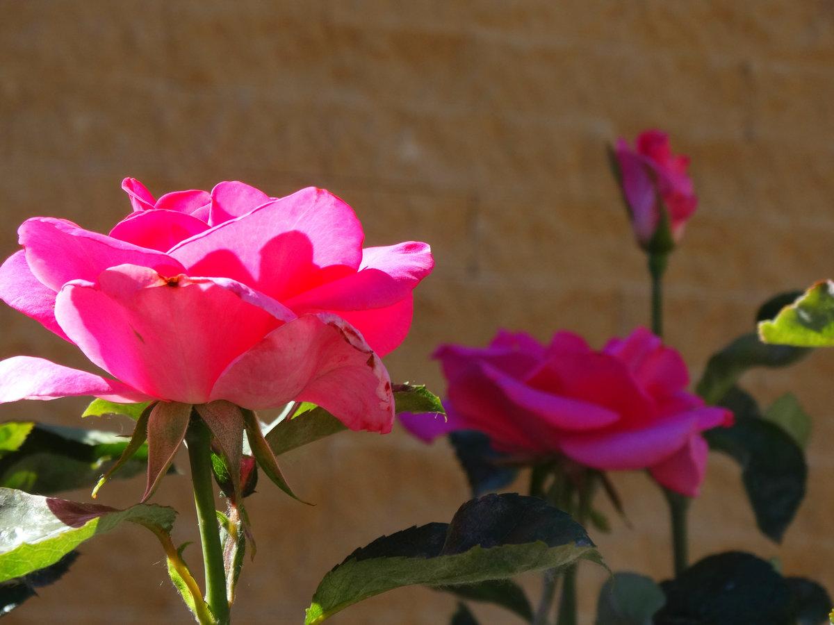 наконец, рецепт роза майская картинки решает