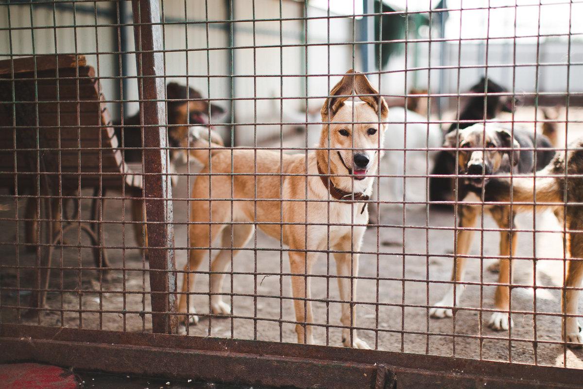 картинки с приюта для собак церемония, которую были