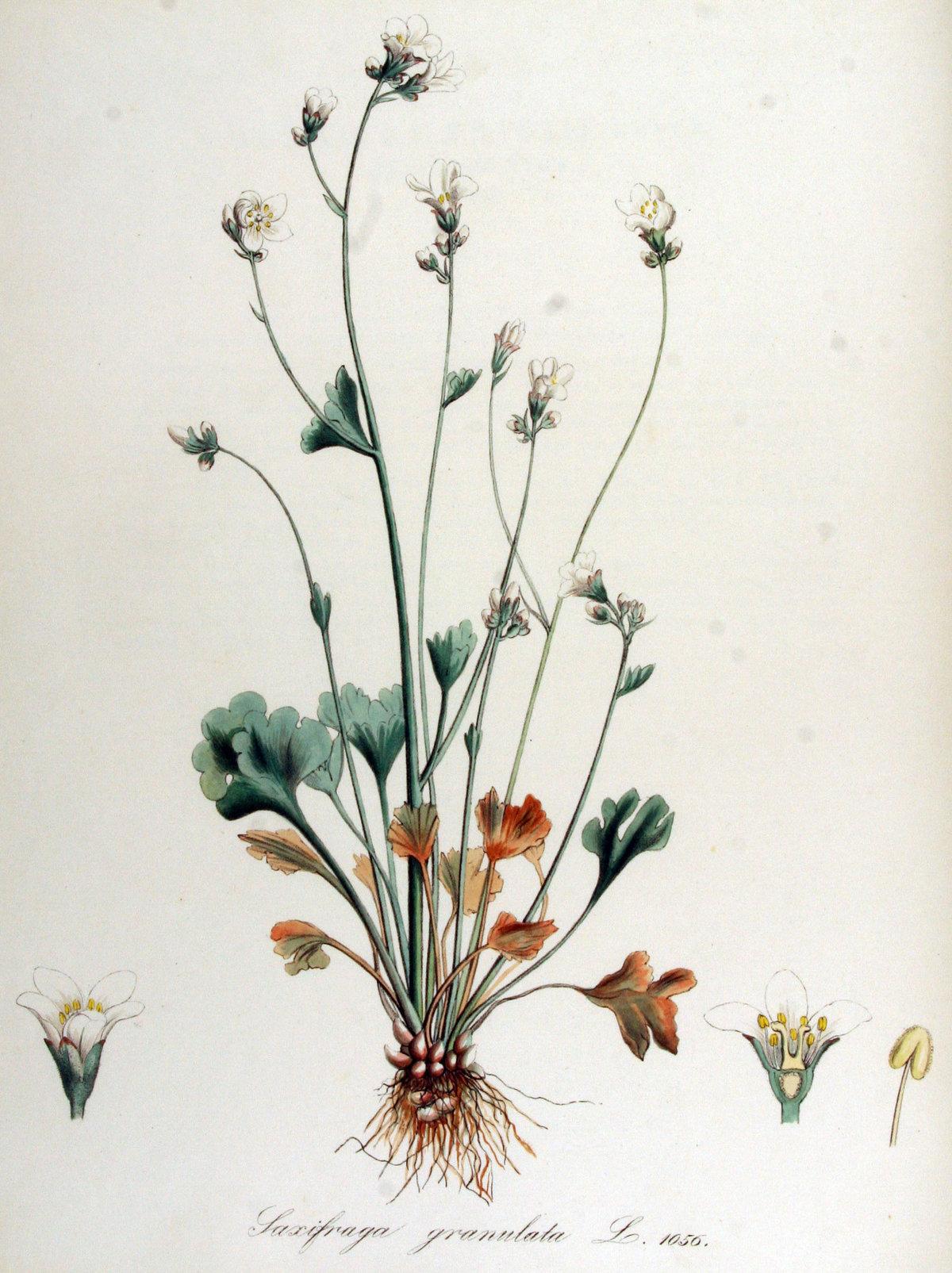 Старинные гербарии картинки, открытка