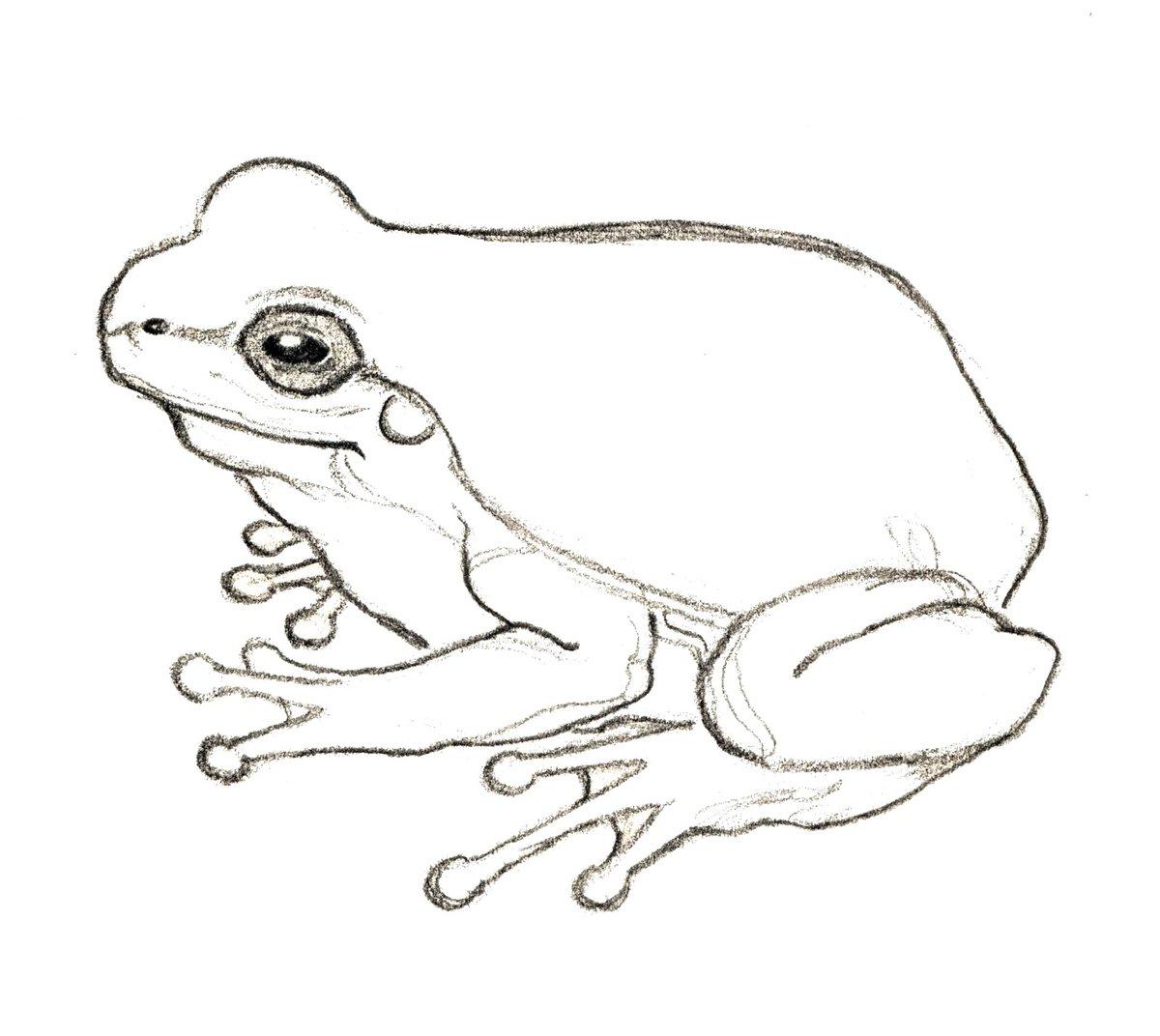 Картинки как рисовать жабу