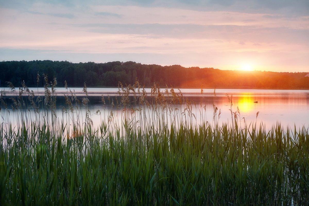 Или, картинки с камышами на озере