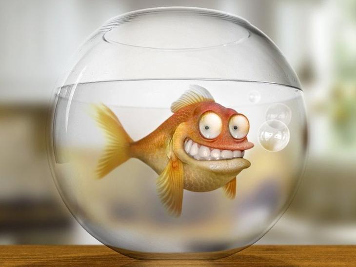 Рисунки смешные рыб, дню учителя