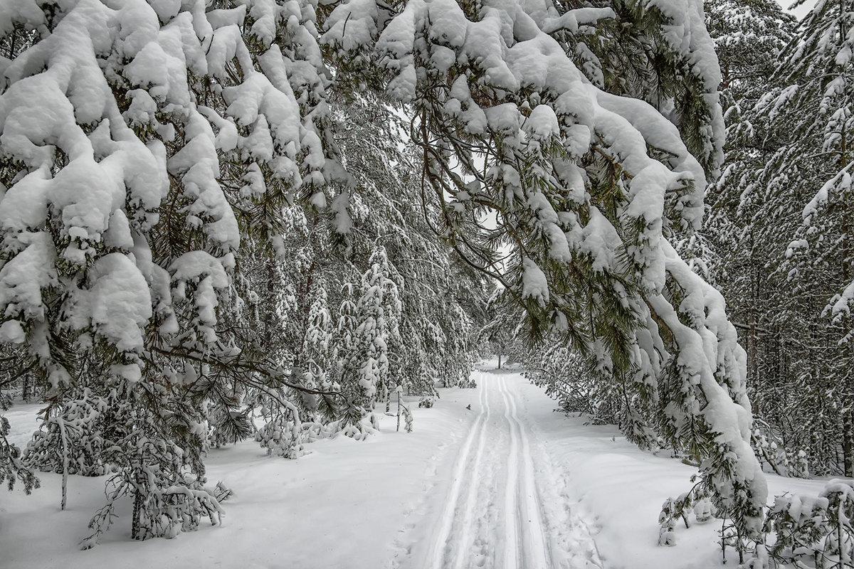 фотографии про снег ли, что мужчинам