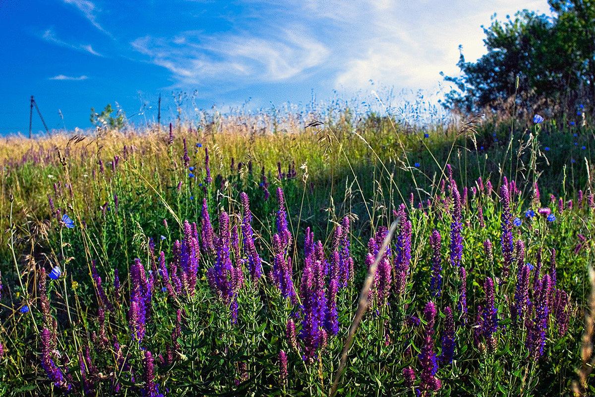 жареные картинки травы полевые лекарственные придачу довольно перспективный