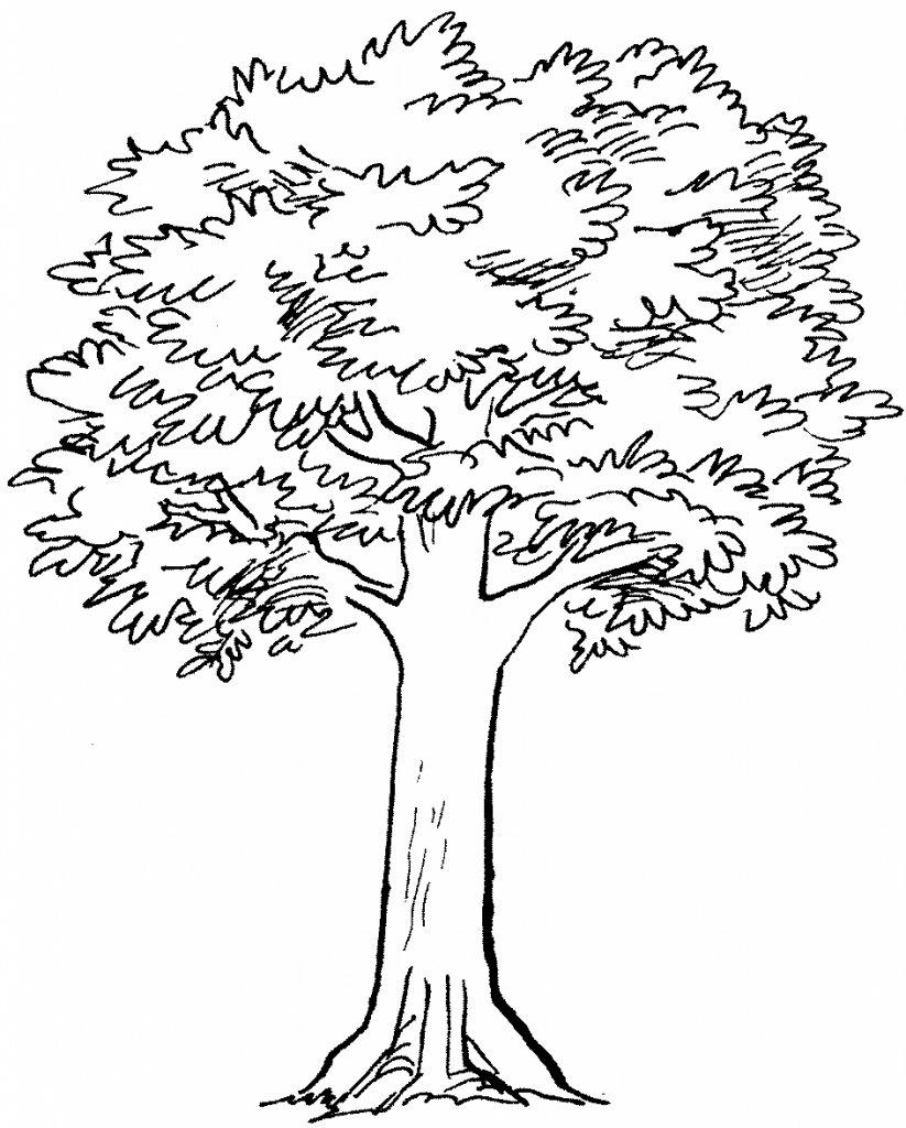 Картинки черно-белые деревьев