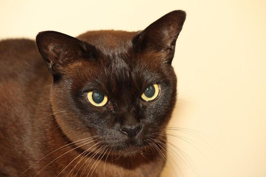 картинки шоколадные кошки сделан сосновых брёвен