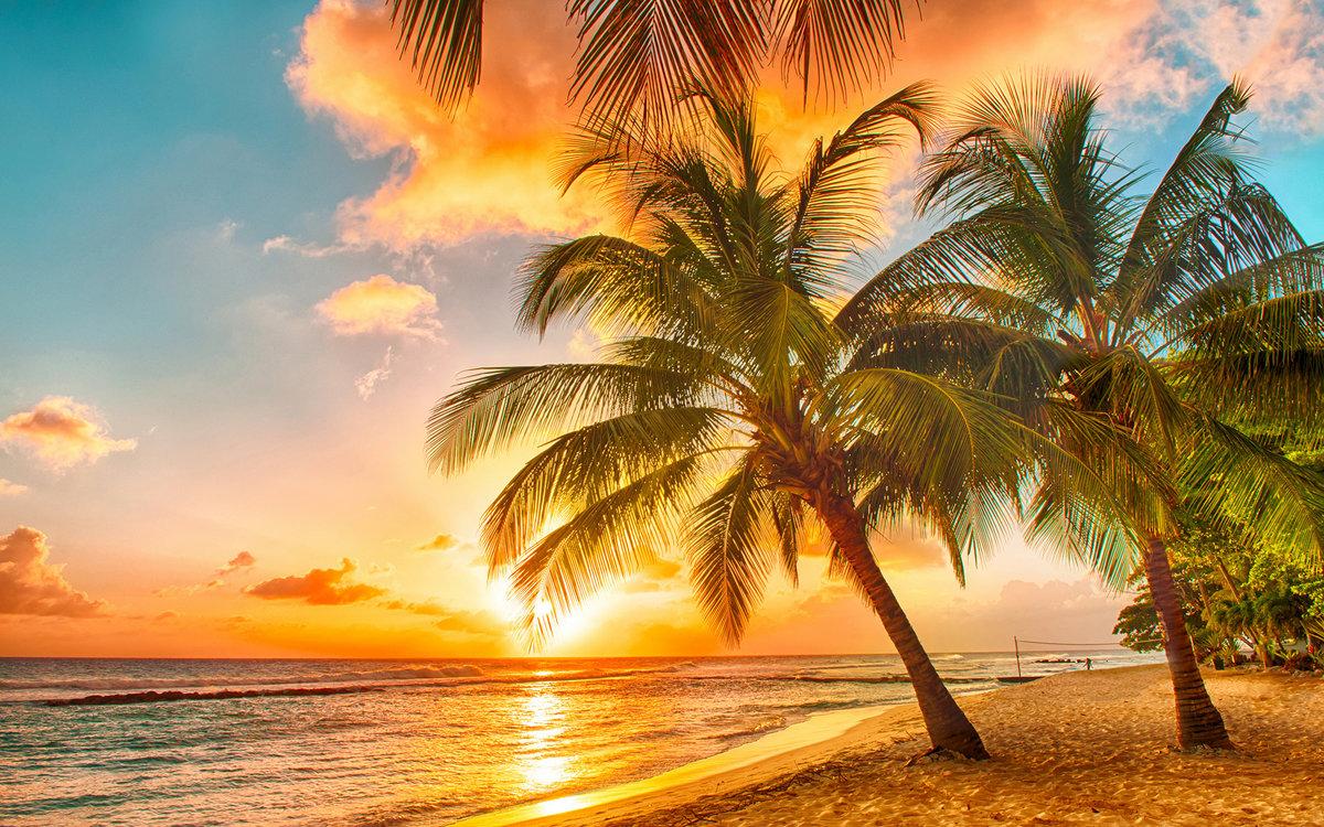 Месяцев открытка, открытка с морем и пальмой