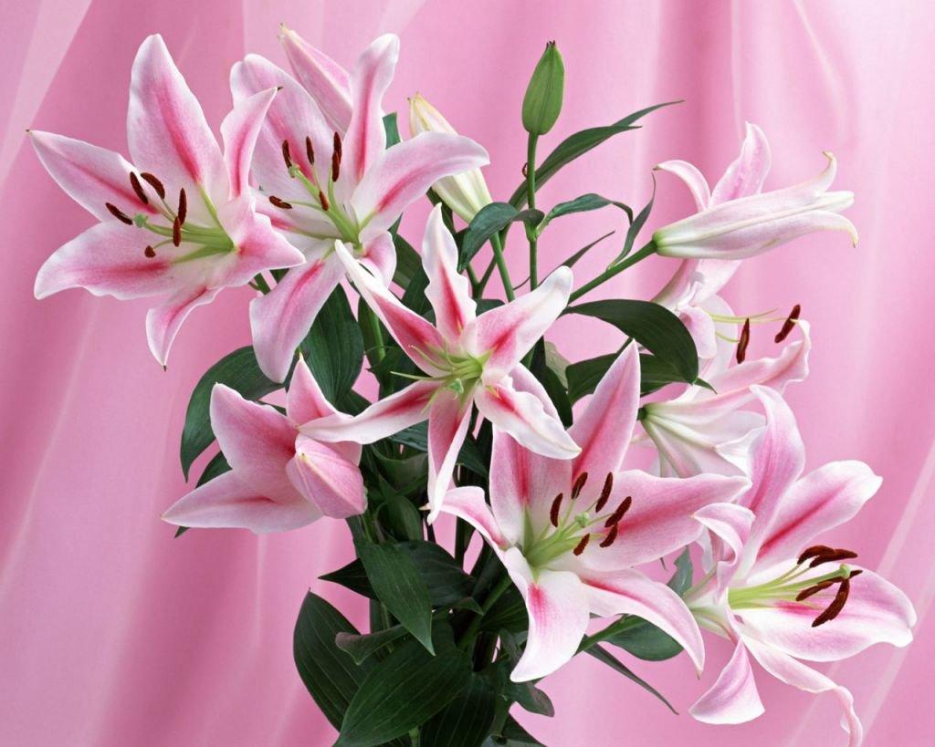 Для, открытка красивой девушке красивые цветы