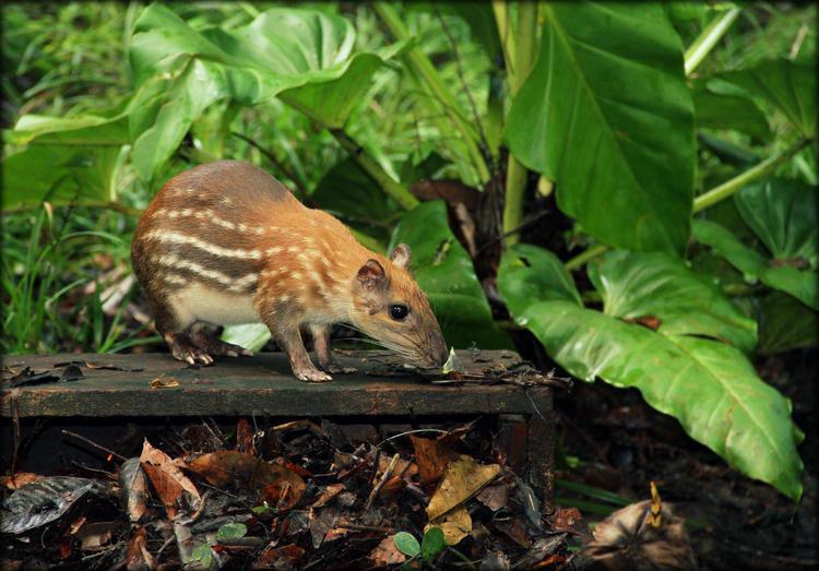 Животные характерные для южной америки фото что желает