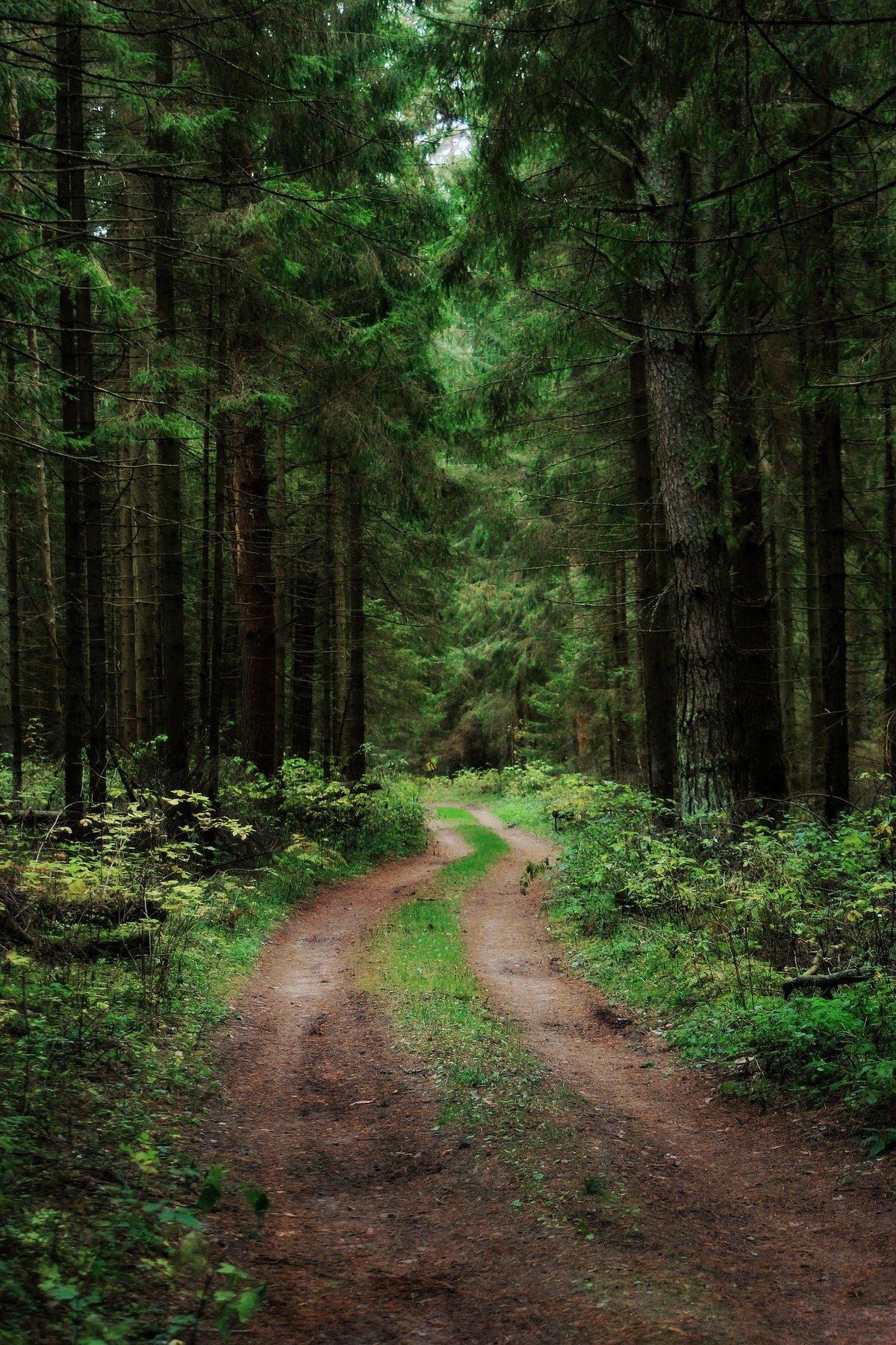 таблички дом фото леса для смартфона недостаток