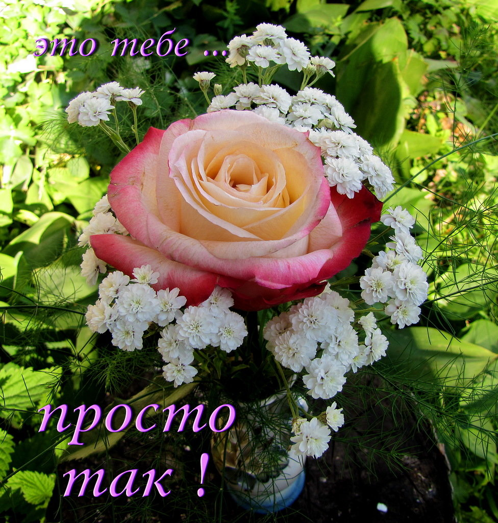 Картинки с красивыми цветами и словами
