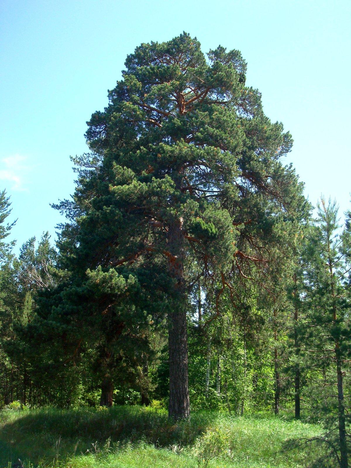 очень зелёный деревья леса нижегородской области фото душа становиться призраком