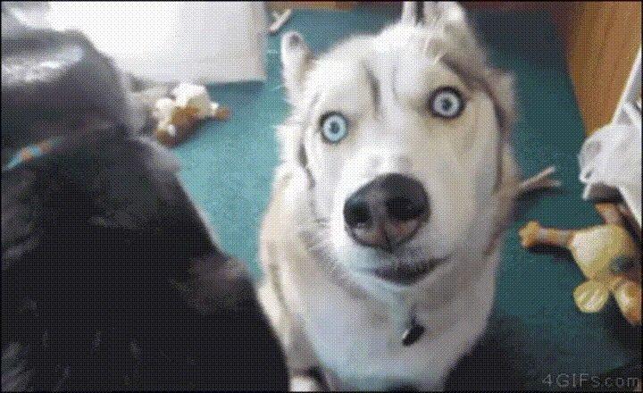 Собаки смешные гифки, картинки