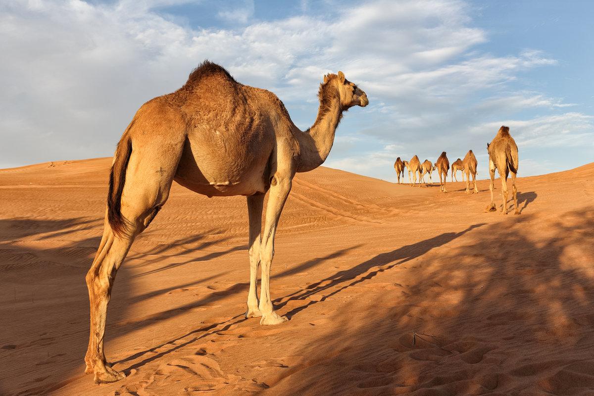 пустыня сахара животный мир картинки позитивный