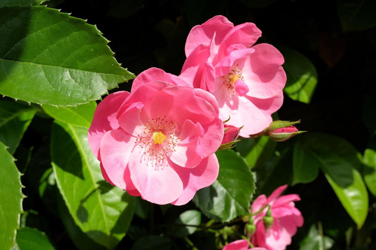 Красивые букеты цветов из тюльпанов фото размеры