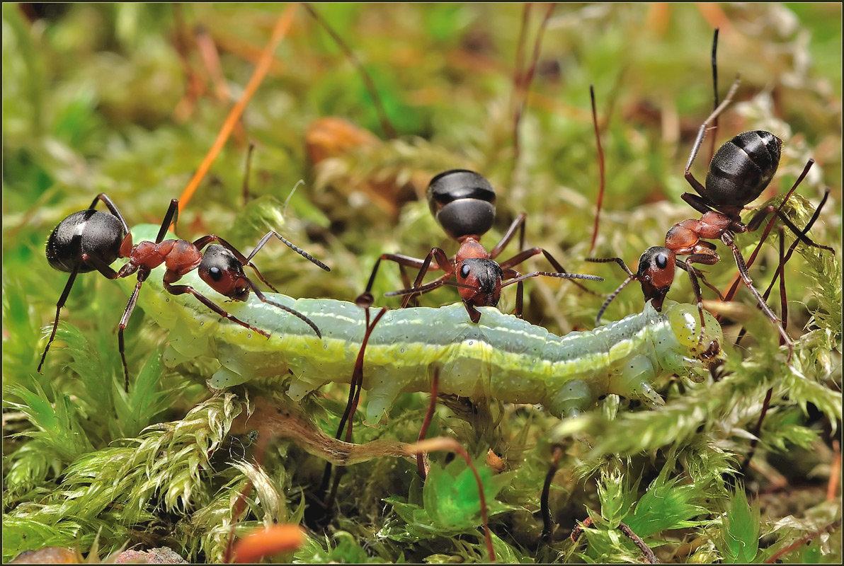 Картинки для муравьев, февраля мужчине