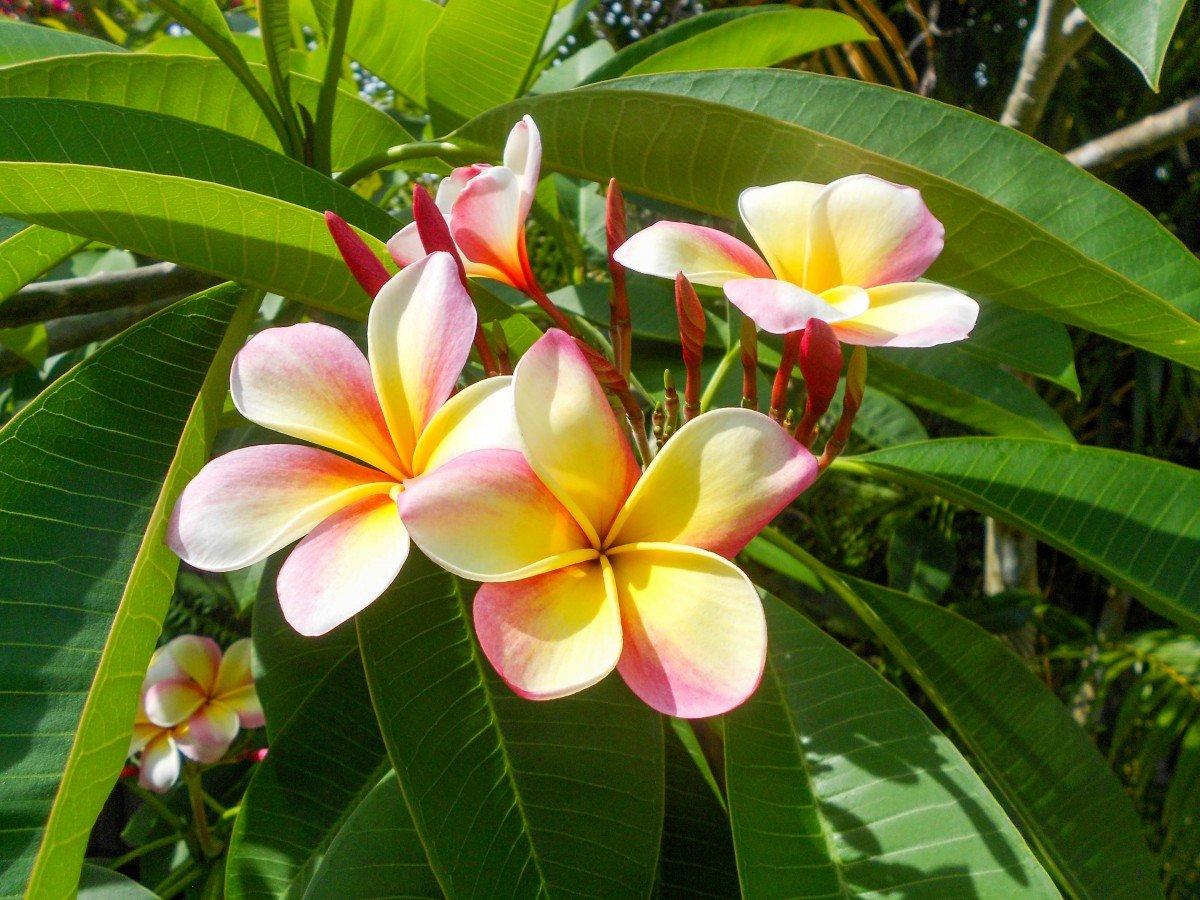 все картинки цветов которые у нас растут день