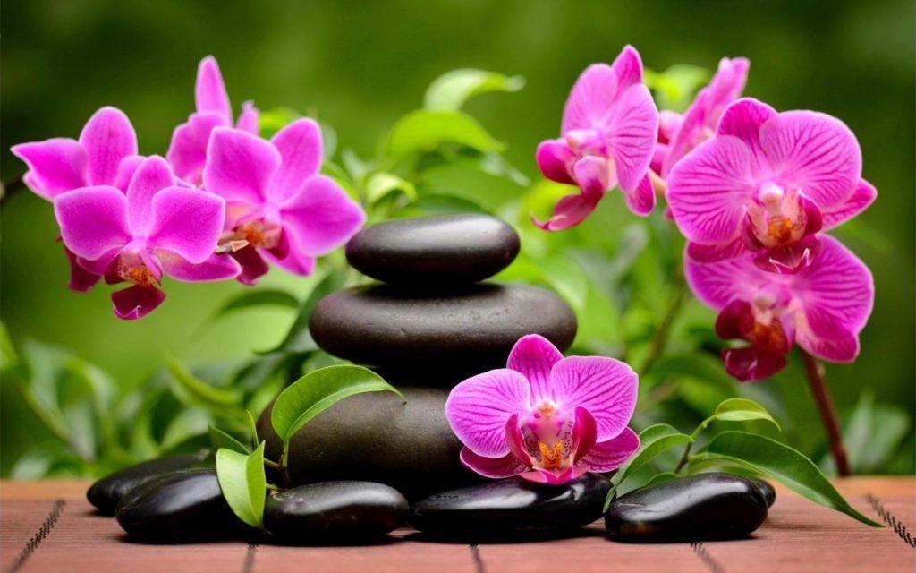 Картинки цветы красивые орхидеи