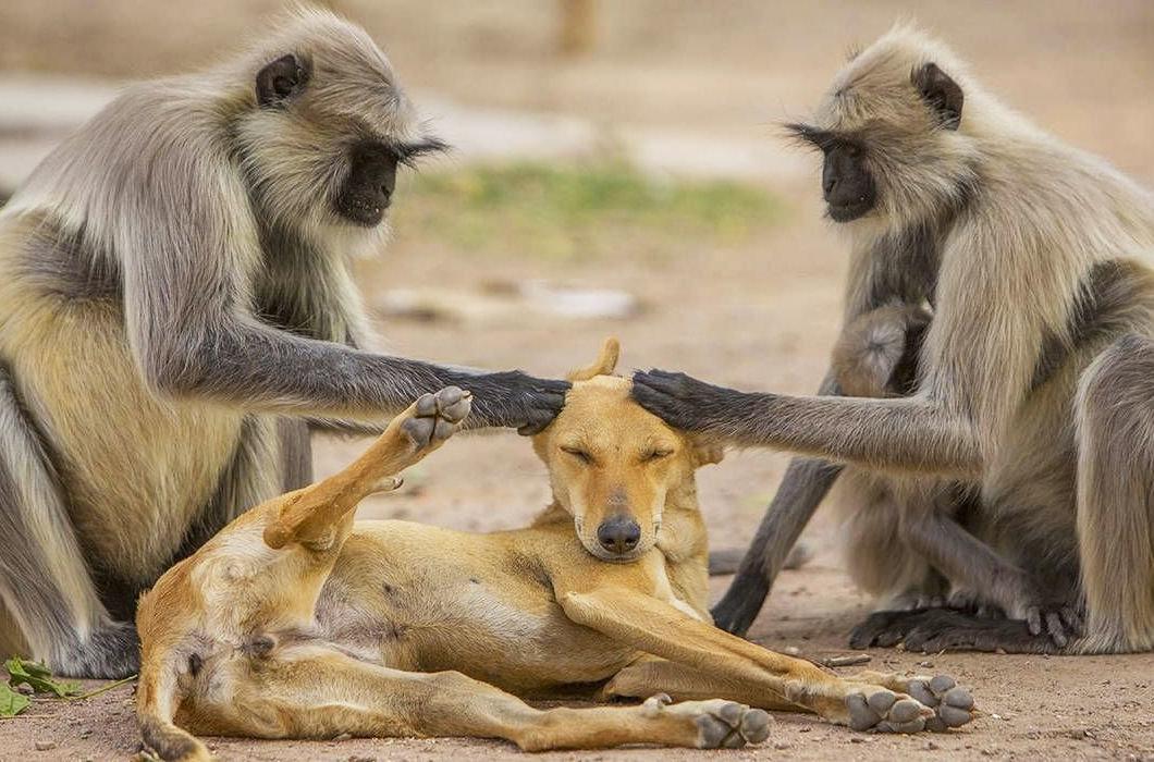 Прикольные картинки про животных до слез
