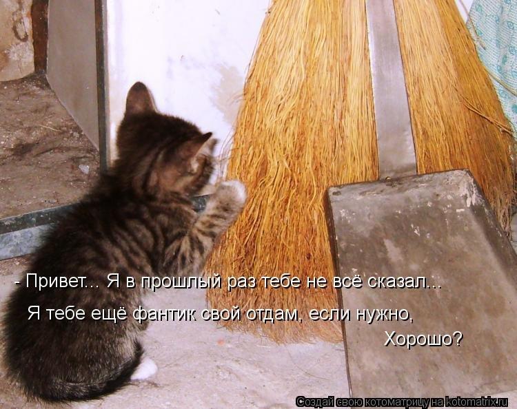 Ночи, самые смешные картинки с надписями до слез про кошек