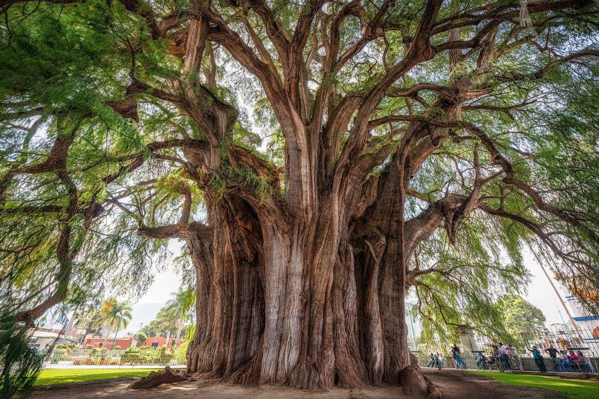 дерево с крепкой древесиной