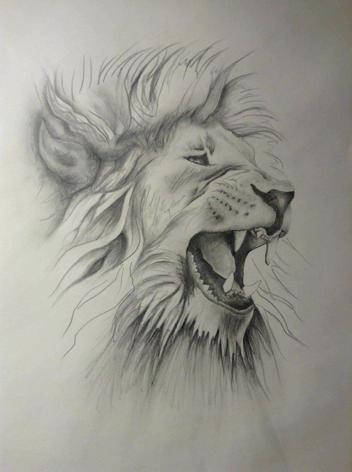Картинка прикольная льва карандашом