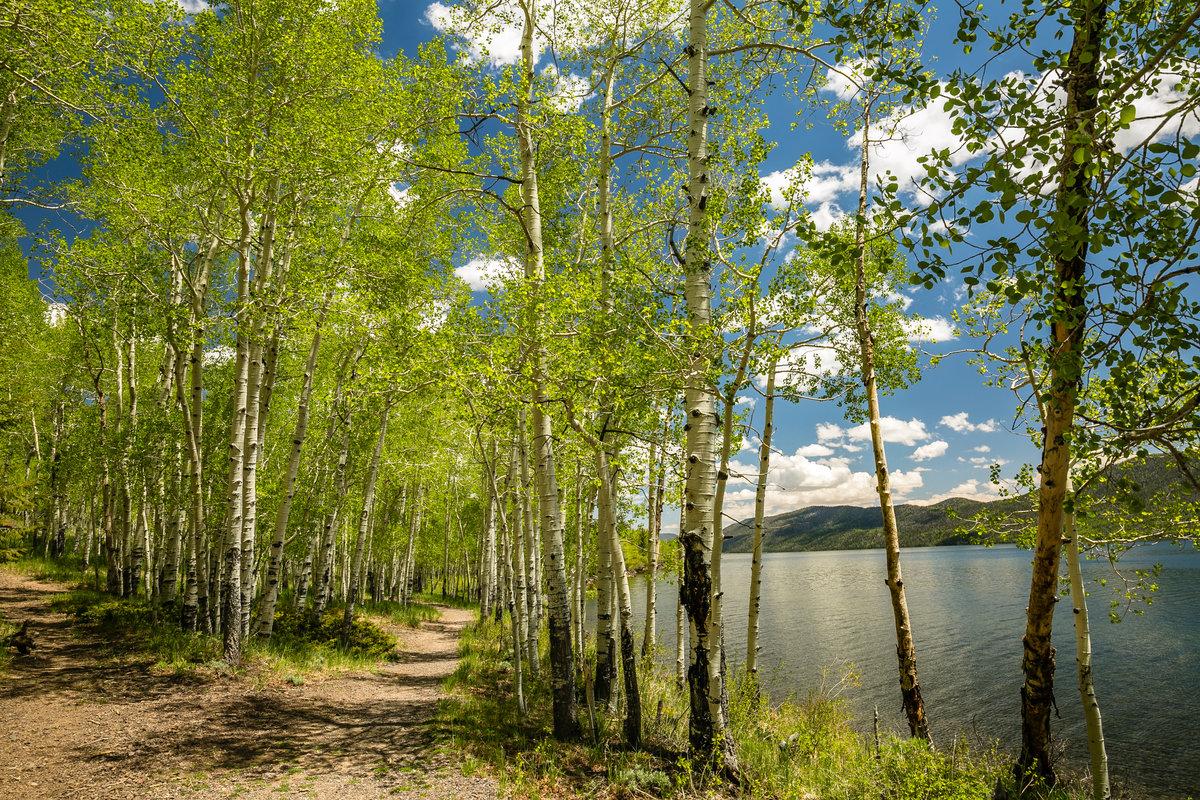 Картинки лес река березки