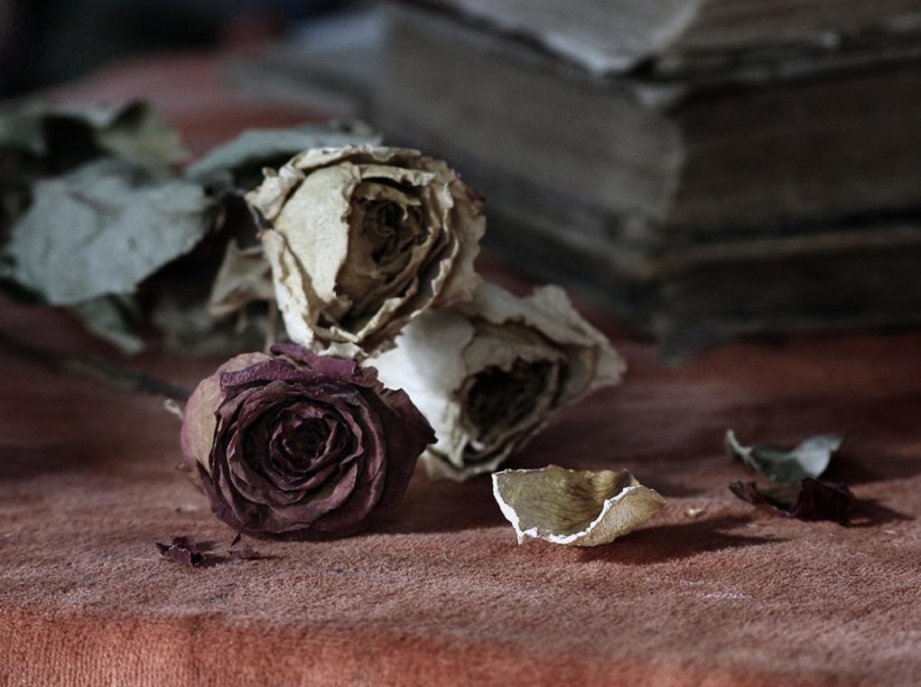 множество опавшие розы фото этот