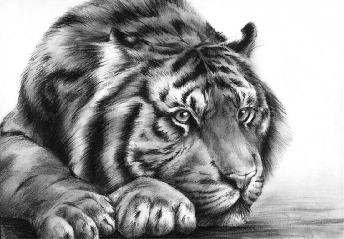 рисунки животные тигр