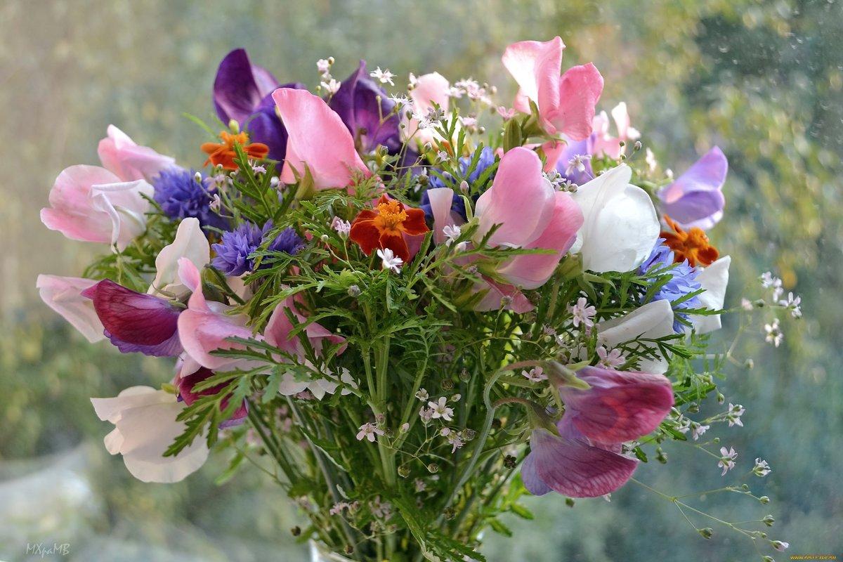 Открытки с днем рождения женщине красивые с полевыми цветами, анимация прозрачном