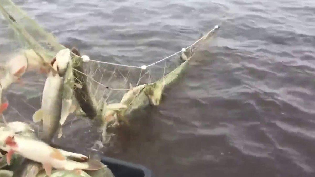 Сетки для рыбалки своими руками фото 998