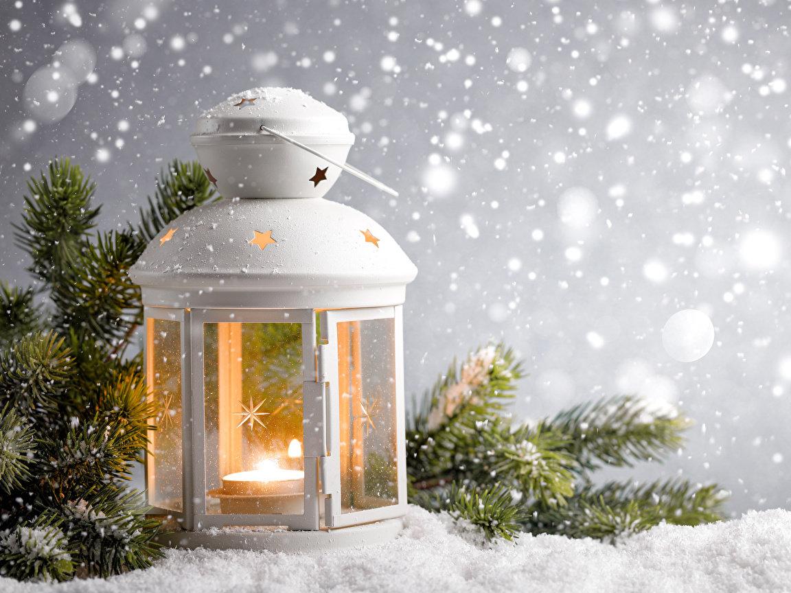 суккуленты имеют фонарь снег картинки родственники против говорят